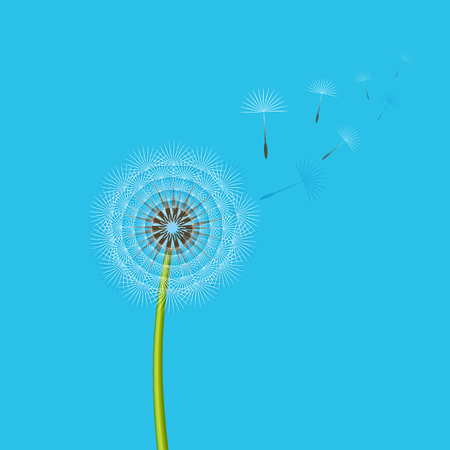 Dandelion blowing from the breeze. Vector illustration. Illustration