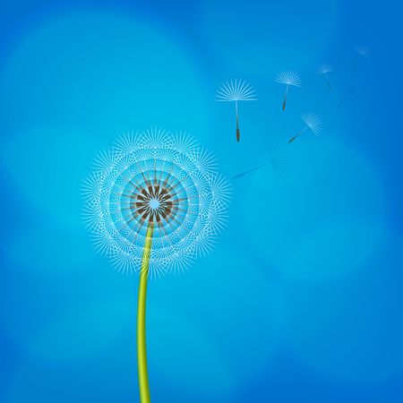 Dandelion blowing from the breeze. Vector illustration. Illusztráció