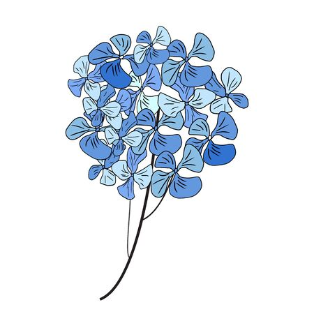 Hydrangea flowers isolated on white background. Vector illustration.
