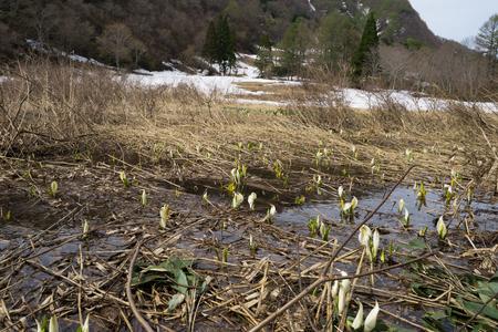 Marshland of spring Stok Fotoğraf - 98353313