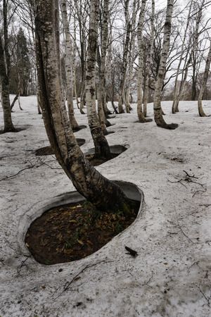 Snow remain forest