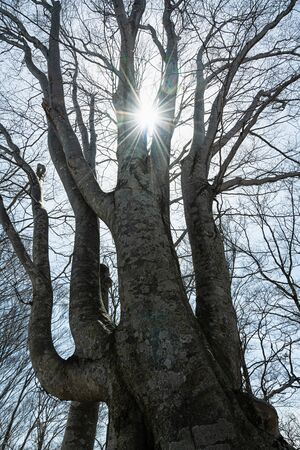 A light beam visible through the gap between beech trees