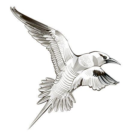 bird illustration: Vector seagull. engraving illustration bird