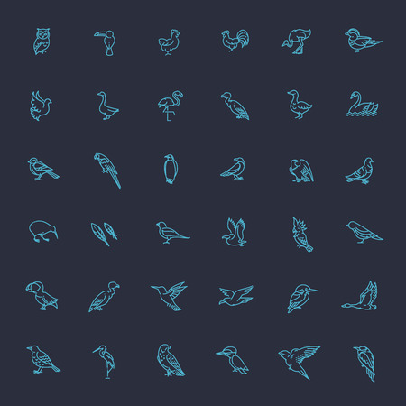 pigeon owl: Set of different birds. Vector line icons