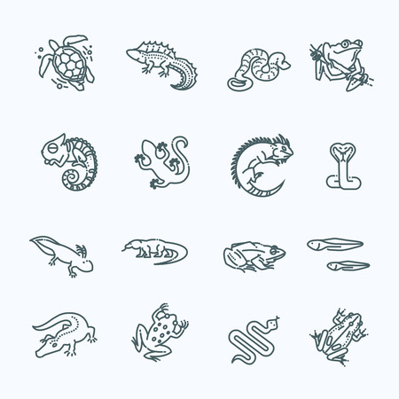 Reptiles and amphibians icons set. Line design Illustration