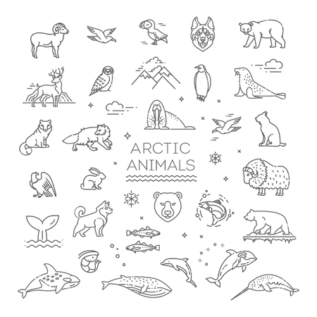 Line arctic wildlife concept with different north animals . Vector 向量圖像