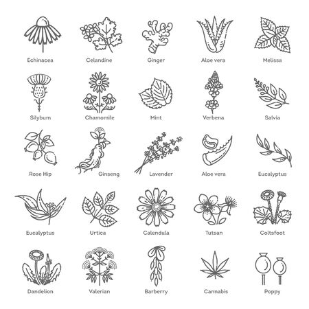 Herbs collection. Medical healthy herbs and flowers Illustration