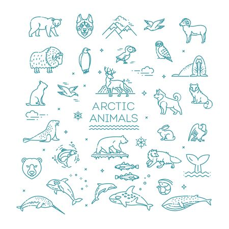 Set of linear vector Arctic animals. Vector 向量圖像