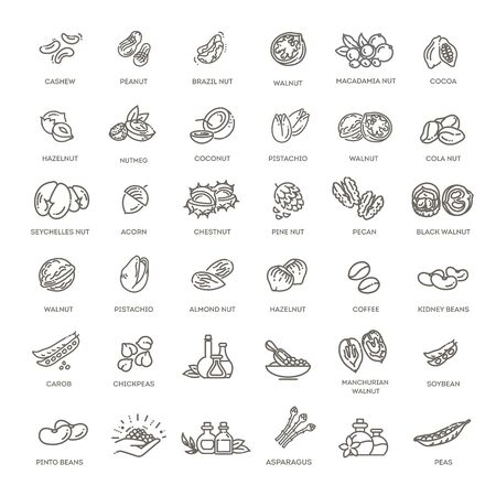 web icons collection - nuts, beans and seed. Vecteurs