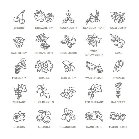 Berries icon set. Vector illustration in modern flat style 向量圖像