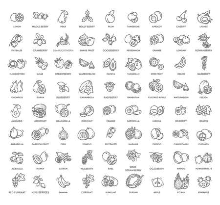 Fuits and berries vector icons. Fresh and natural ingredients