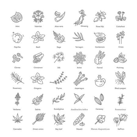 Thin line spices, condiments and herbs icons set