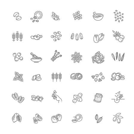 Set of outline cereal grains, seeds and nuts  イラスト・ベクター素材