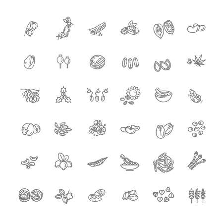 Plant seed and nuts vector icon set 向量圖像