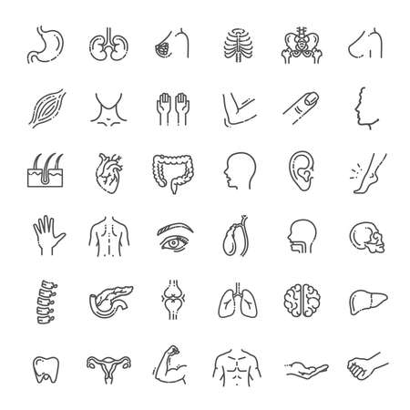 Set of vector line icons of anatomy