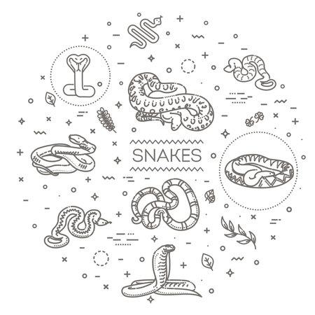 Snakes elongated, legless, carnivorous reptiles