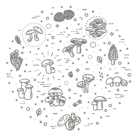 Edible mushrooms vector illustrations collection