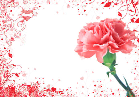 background with carnation