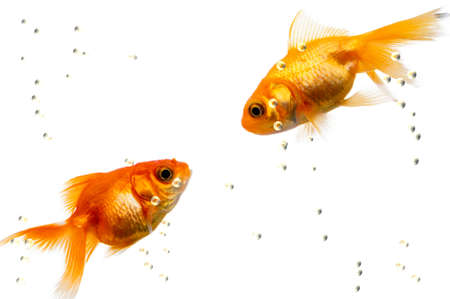 fishes in love Stock Photo - 1614702