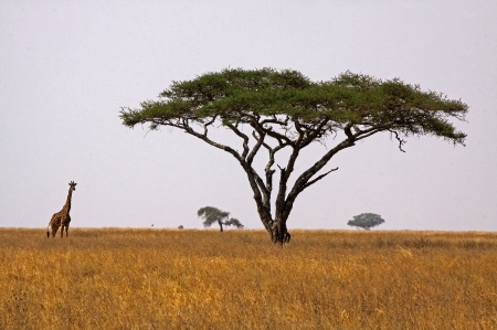 Africa view photo
