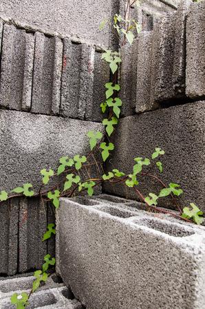 brick and leaf photo