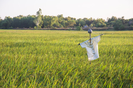 countrified: scarecrow in rice field Stock Photo