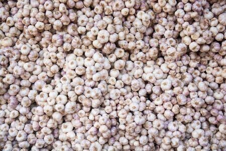 allium: Common Garlic Allium Garlic Allium sativum L. Background Stock Photo