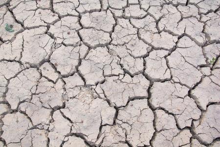 dry land: Dry land. Cracked ground background.