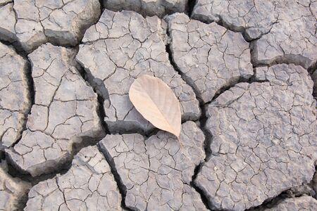 dry land: Dry land. Cracked ground background