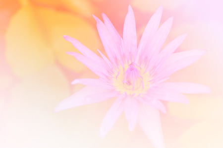 limbo: Beautiful soft color pink and blue flowers backgrounds nature - Lotus Stock Photo