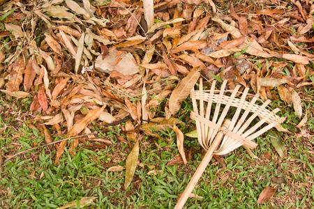 harrow: Wood, bamboo harrow and leaf dry Stock Photo