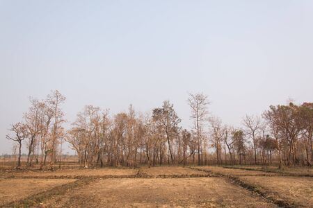 ravaged: Forest fires with burned trees