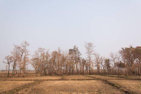 la quemada: Los incendios forestales con árboles quemados
