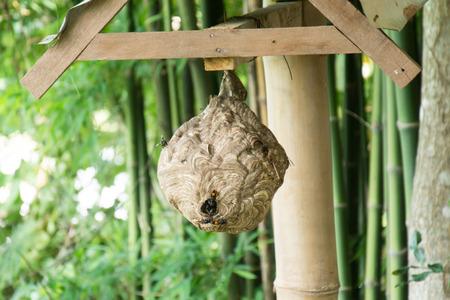 saliva: Wasp nest