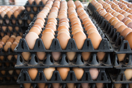 Eggs from chicken farm in the package that preserved for sale Stock Photo