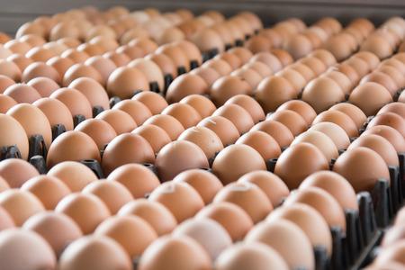 Eier aus Hühnerfarm in das Paket, das zum Verkauf erhalten Standard-Bild - 61991278