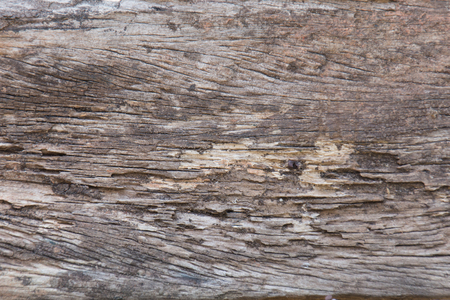 drywood: texture of traces of termites eat wood background