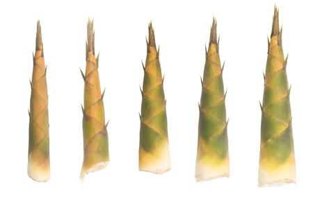 shoots: Bamboo shoots