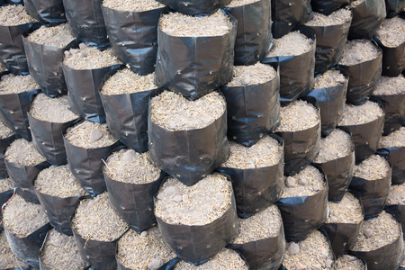 Soil in bags propagated Stock Photo