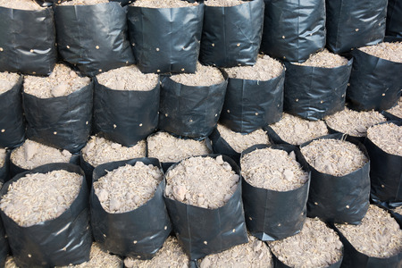 propagated: Soil in bags propagated Stock Photo