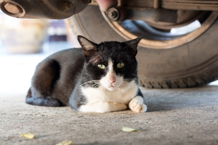Black cat laying under a car Stock Photo