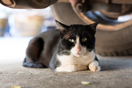 the silencer: Black cat laying under a car Stock Photo