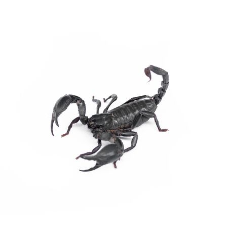 Scorpion isolated on white background Stock Photo