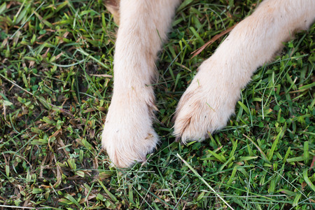 dog paws in the green grass.