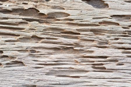 drywood: Traces of termites eat wood