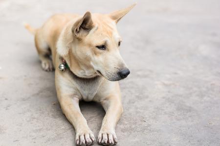 perro asustado: sleeping dog on cement floor Foto de archivo