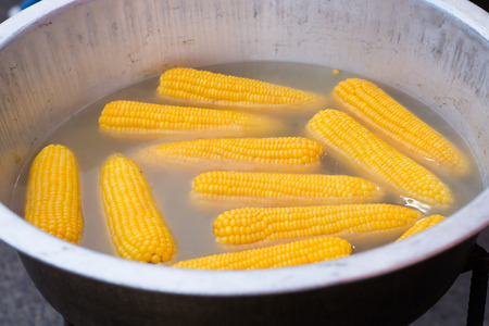 boiling: corn boiling in pot