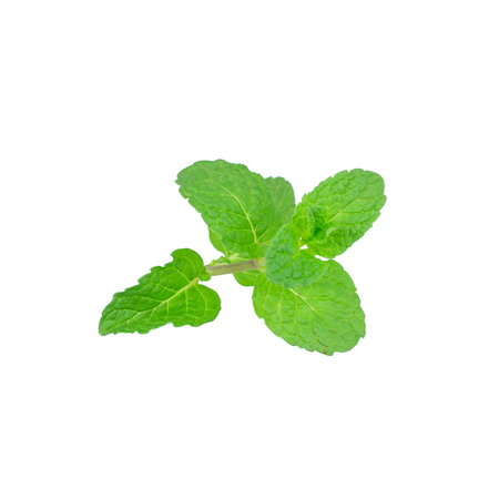 Mint leaf green plants isolated on white background, peppermint aromatic properties of strong teeth and fresh ivy as a ground cover plant types Stock Photo