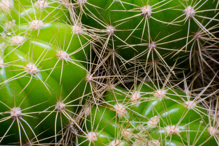 close up macro of a cactus with morning dew on it
