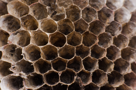 paper wasp: Close up Hornets nest is polist with honey reserves in honeycombs. Stock Photo